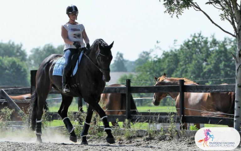 5.Paardencoaching Gelderland Ruitercoaching