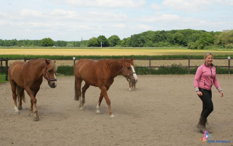 13.paarden-coach-gelderland-8x6