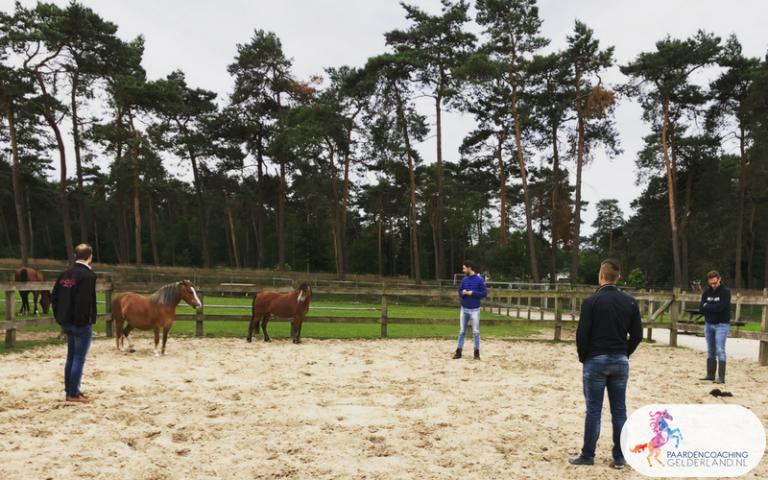Paardencoaching met JCI Ede Systemisch werken met kernkwadranten