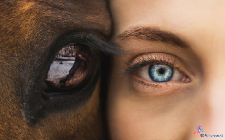 22.paarden-coach-gelderland-8x6
