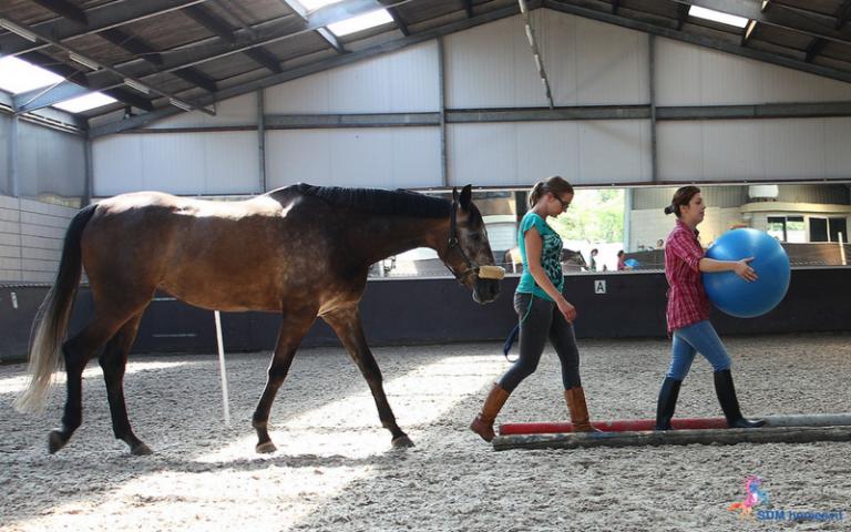 26.paarden-coach-gelderland-8x6