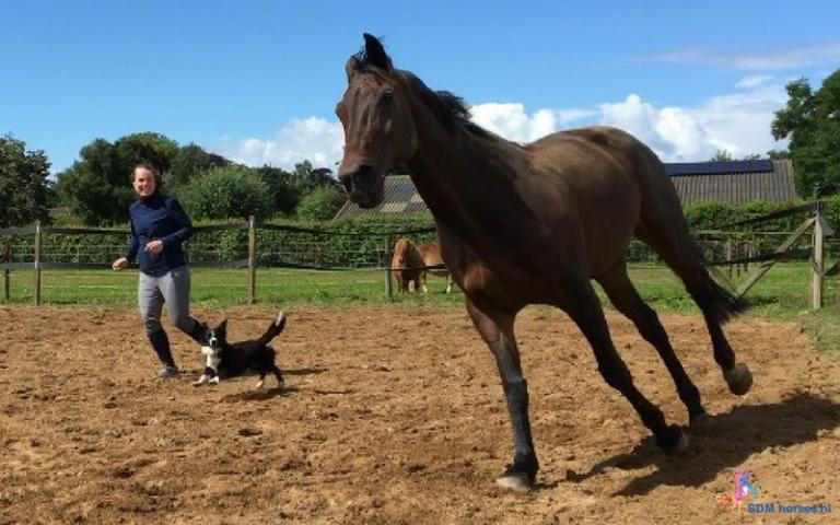 3.paarden-coach-gelderland-8x6-2