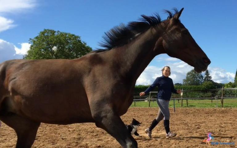 4.paarden-coach-gelderland-8x6-2